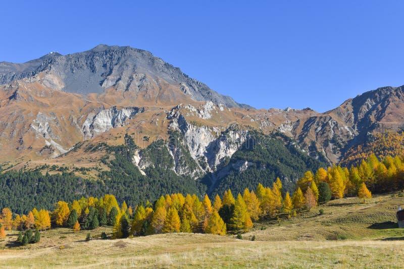 paisaje del otoño en las altas montañas con los alerces amarillos fotos de archivo libres de regalías