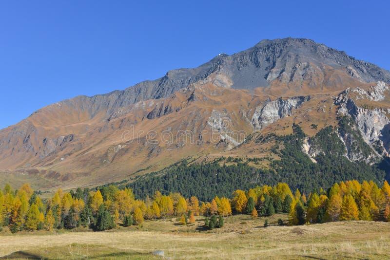 paisaje del otoño en las altas montañas con los alerces amarillos fotografía de archivo libre de regalías
