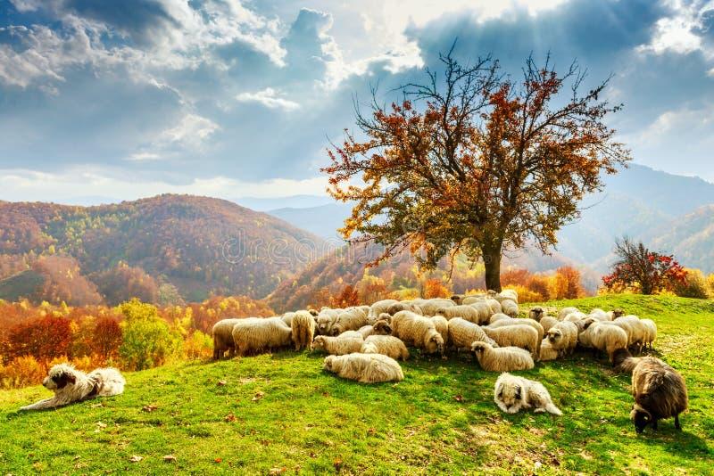 Paisaje del otoño en los Cárpatos rumanos foto de archivo libre de regalías