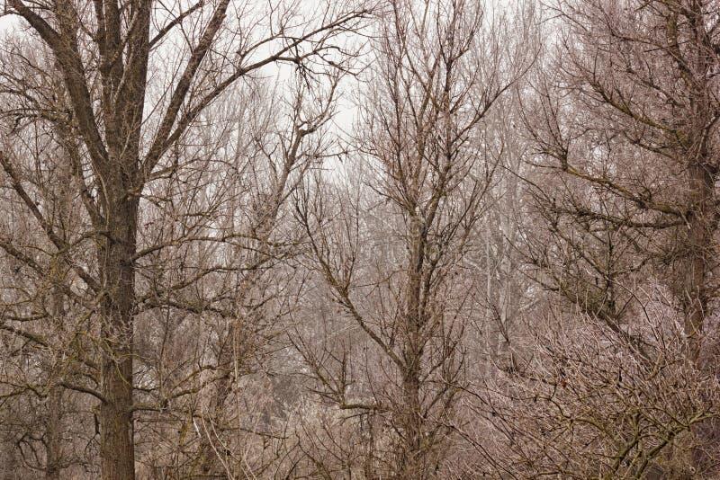 Paisaje del otoño, fondo - bosque del otoño con follaje caido en la niebla fotos de archivo