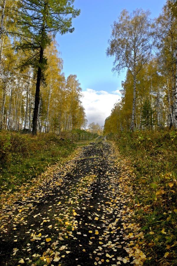 Paisaje del otoño, hojas que caen, camino forestal fotos de archivo