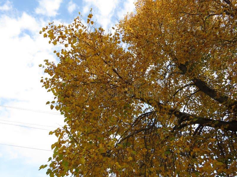 Paisaje del otoño, parque del otoño adentro con los árboles de oro del otoño en tiempo soleado fotos de archivo