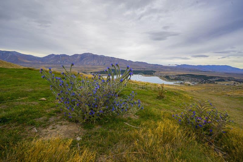 Paisaje del paisaje de Nueva Zelanda durante día nublado imagenes de archivo