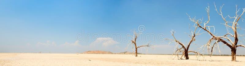 Paisaje del panorama de árboles muertos. foto de archivo libre de regalías