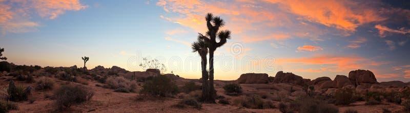 Paisaje del panorama del parque nacional del árbol de Joshua imagenes de archivo
