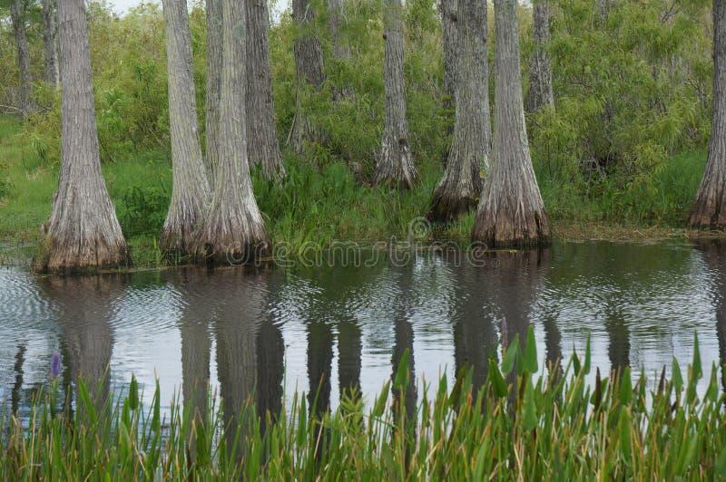 Paisaje del pantano fotografía de archivo libre de regalías