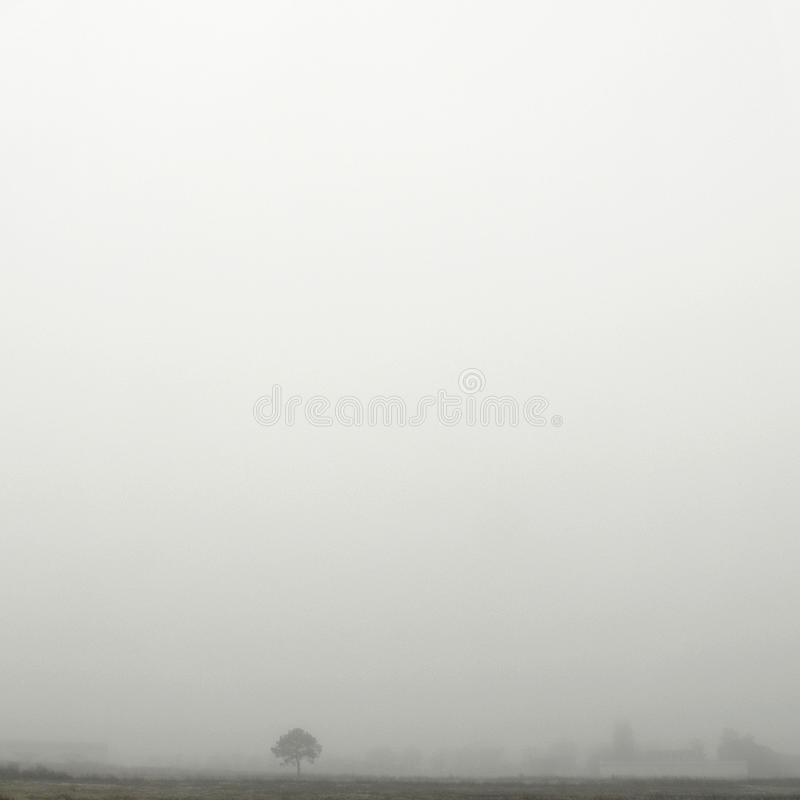 Paisaje del pantano debajo de la niebla en invierno fotos de archivo