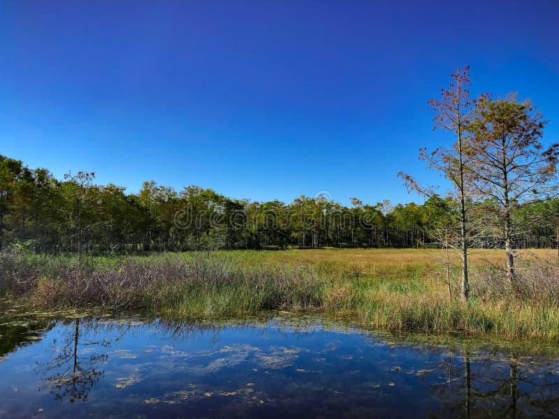 Paisaje del pantano del otoño imagenes de archivo