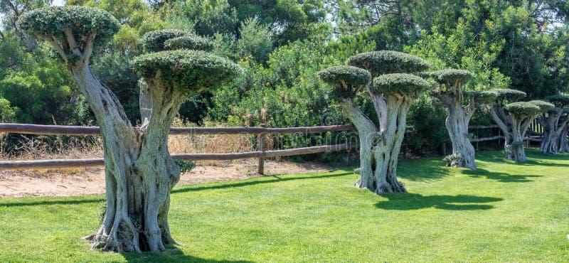 Paisaje del parque con los árboles decorativos de los bonsais imagen de archivo