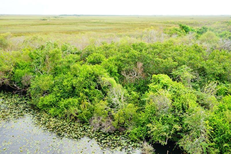 Paisaje del parque nacional de los marismas foto de archivo