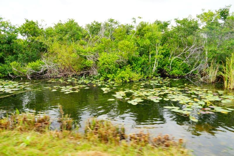 Paisaje del parque nacional de los marismas imagen de archivo libre de regalías