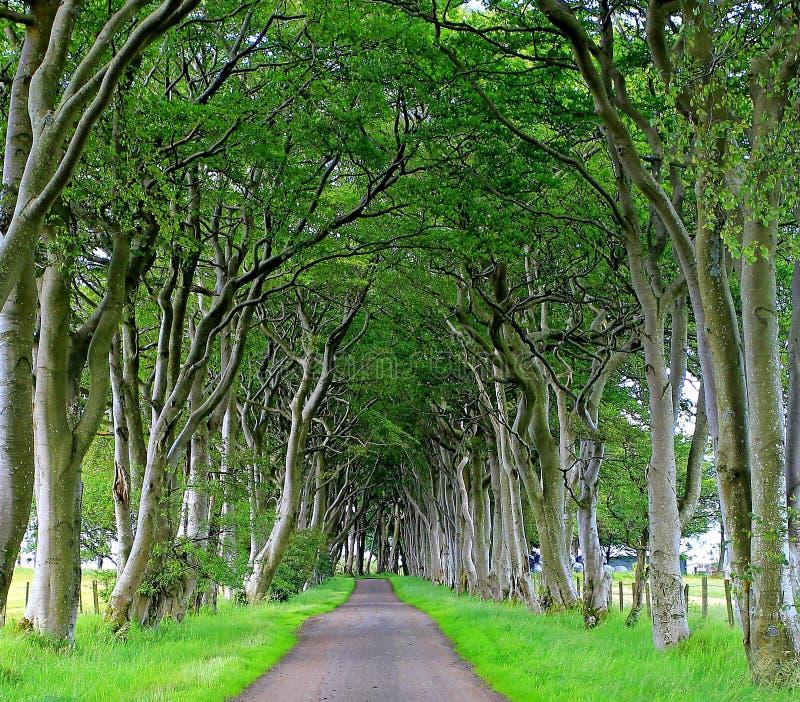 paisaje del pasillo de árboles imagen de archivo libre de regalías