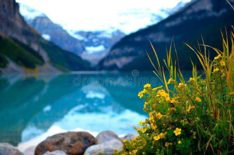 Paisaje del piojo del lago con las flores Canadá fotos de archivo libres de regalías