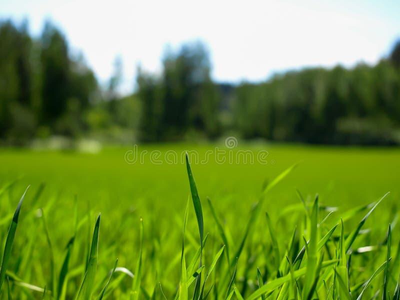 Paisaje del prado imagen de archivo
