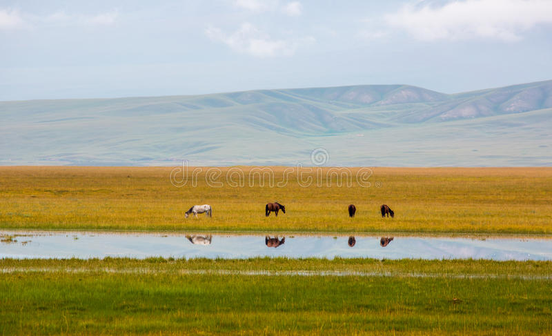 Paisaje del prado de Bayinbuluke imagenes de archivo