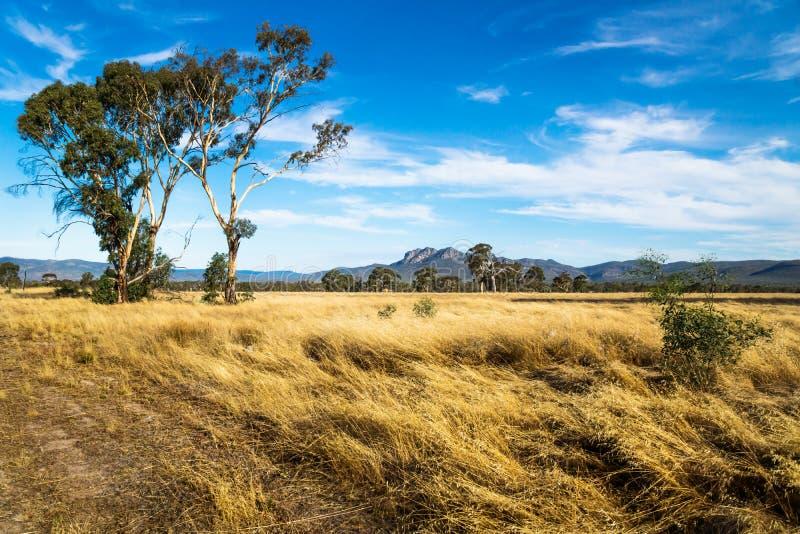 Paisaje del prado en el arbusto con las montañas de Grampians en el fondo, Victoria, Australia fotografía de archivo libre de regalías