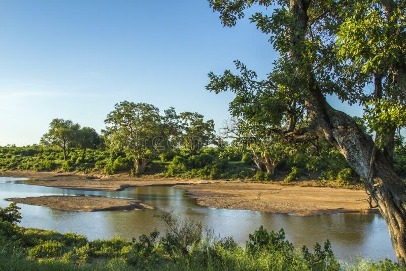 Paisaje del río de Shingwedzi en el parque nacional de Kruger foto de archivo