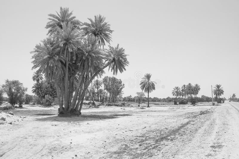 Paisaje del racimo de árboles de la fecha en un pueblo imágenes de archivo libres de regalías