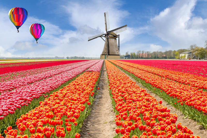 Paisaje del ramo holandés de tulipanes con impulso del aire caliente foto de archivo