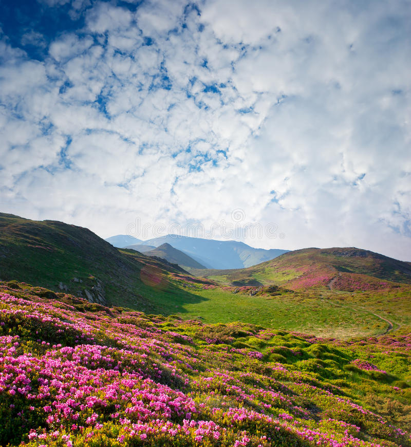 Paisaje del resorte con el cielo nublado y la flor foto de archivo