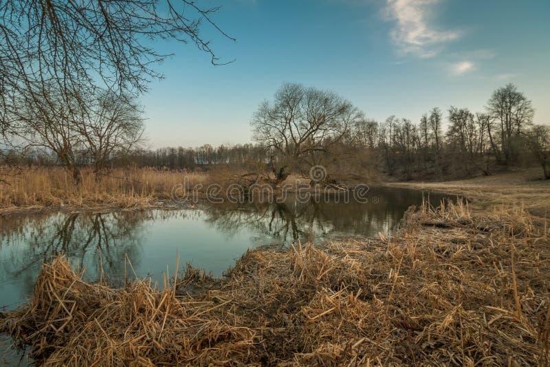 Paisaje del resorte río estrecho con los bancos pantanosos demasiado grandes para su edad con las cañas foto de archivo