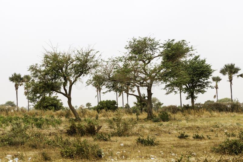 Paisaje del Sahel imagen de archivo libre de regalías