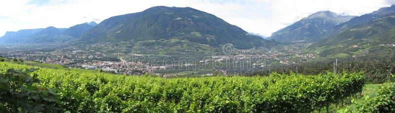 Paisaje del Tyrol del sur con las tierras cultivadas tradicionales imagen de archivo