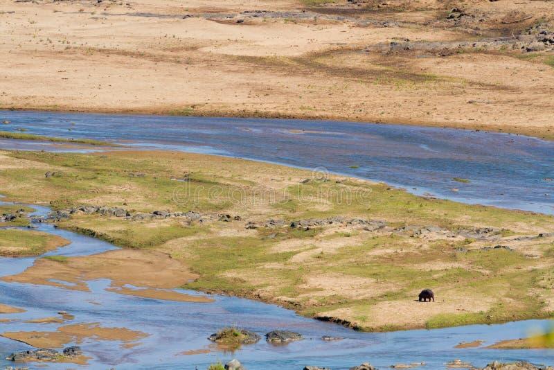 Paisaje del Uno-hipopótamo fotografía de archivo