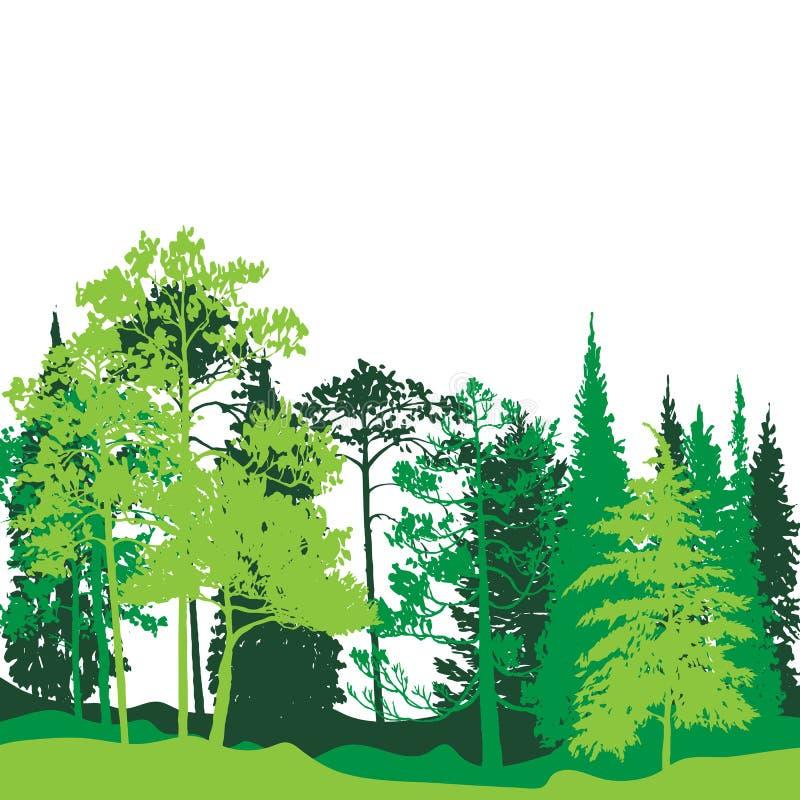 Paisaje del vector con los árboles de pino ilustración del vector