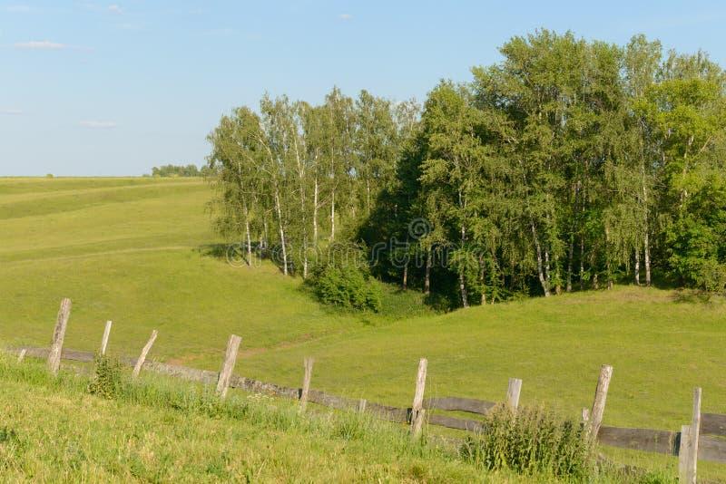 Paisaje del verano con delanteras verdes y la cerca de madera vieja fotografía de archivo