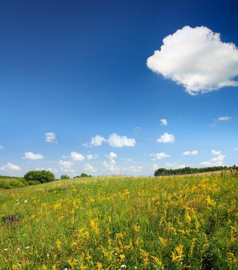 Paisaje del verano con el prado del flor imagenes de archivo