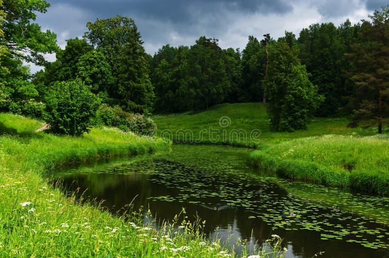 Paisaje del verano con el río en el parque de Pavlovsk foto de archivo