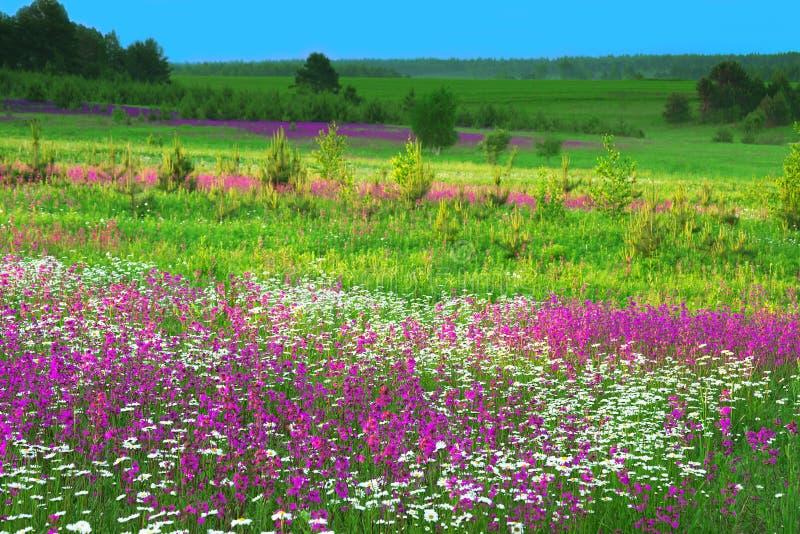 Paisaje del verano con las flores en un prado y una puesta del sol imagenes de archivo