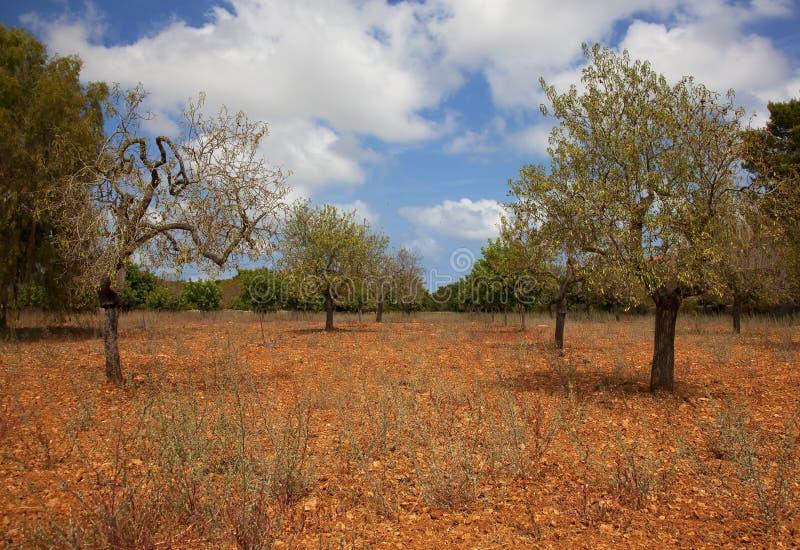 Paisaje Del Verano De Mallorca Fotografía de archivo