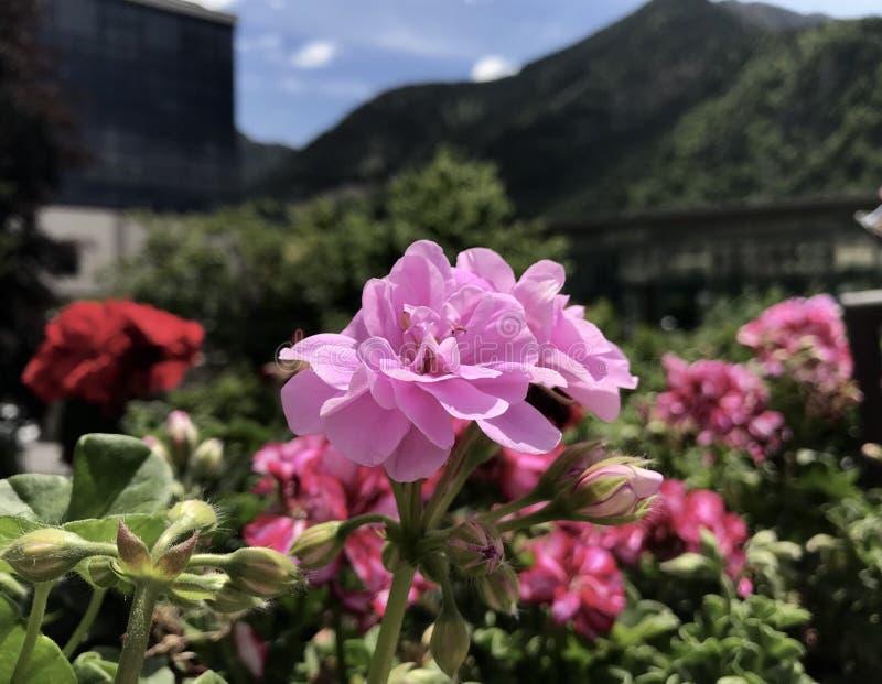 Paisaje del verano en Andorra-la-Vella imagenes de archivo