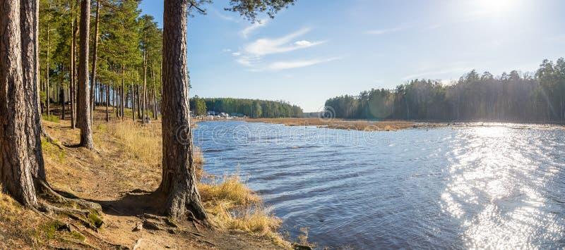 Paisaje del verano en la orilla del río con el bosque del pino, Rusia, Ural imágenes de archivo libres de regalías