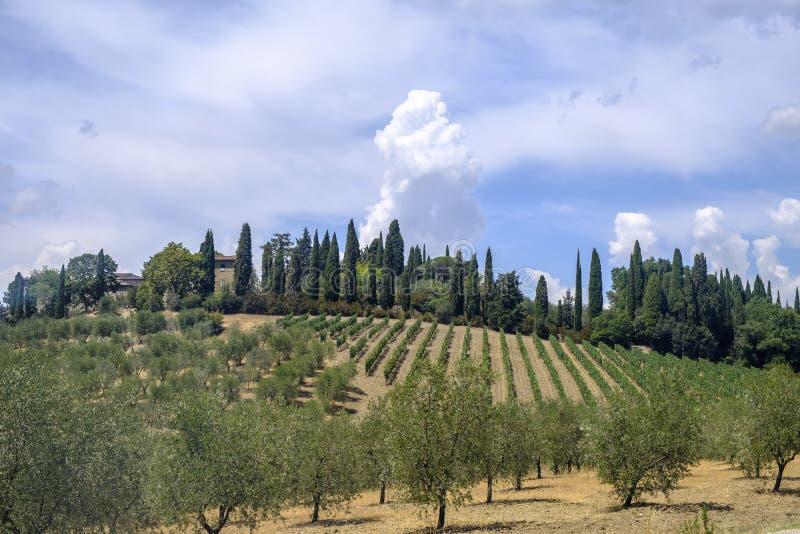 Paisaje del verano en la región Toscana de Chianti imagen de archivo