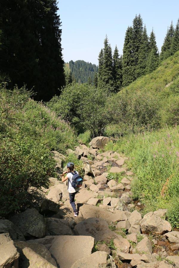 Paisaje del verano en las monta?as fotografía de archivo libre de regalías
