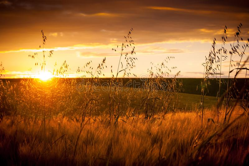 Paisaje del verano: puesta del sol sobre un fondo de un campo con una estera imagen de archivo libre de regalías
