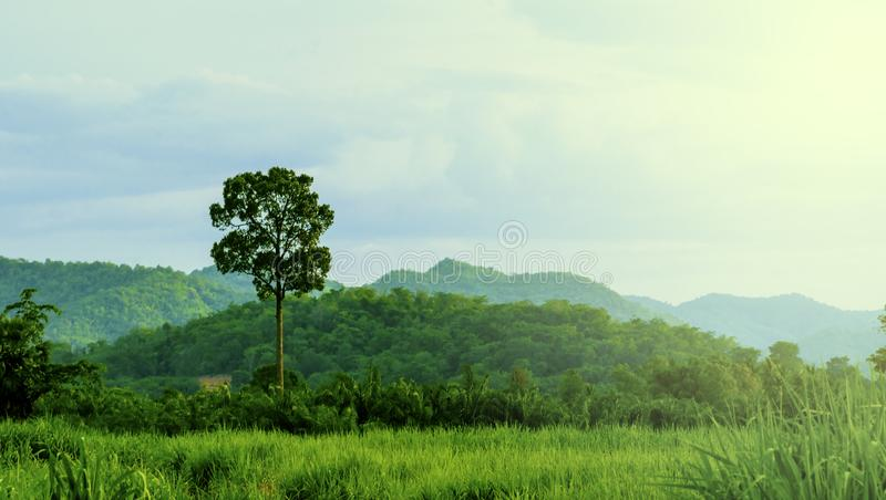 Paisaje del verdor de la naturaleza local de Tailandia con las vistas de las montañas y de los prados en la mañana imagen de archivo