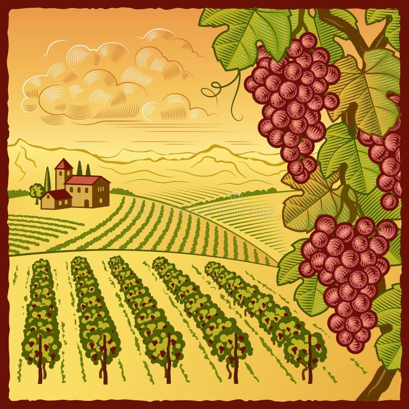 Paisaje del viñedo ilustración del vector