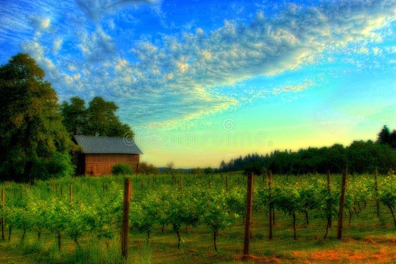 Paisaje del viñedo imagenes de archivo
