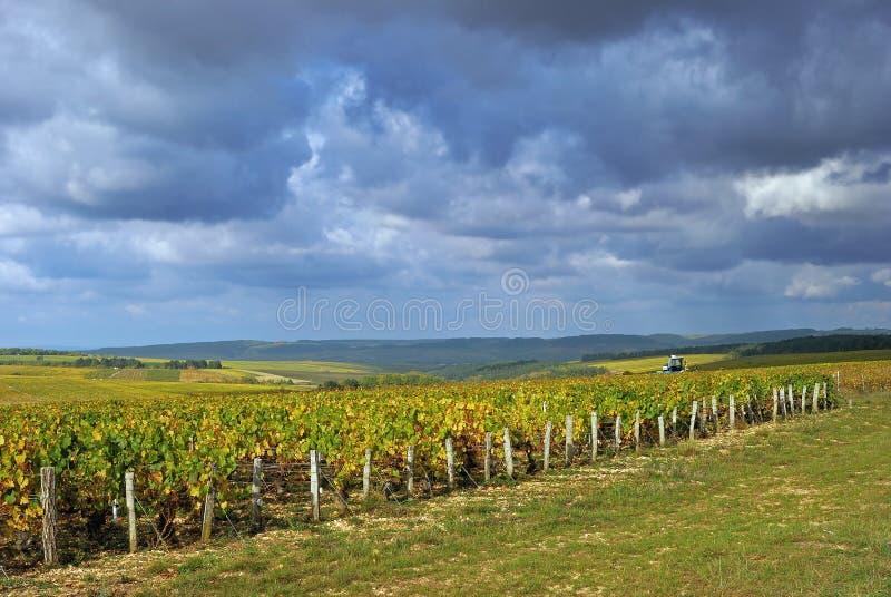 Paisaje del viñedo, Borgoña, Francia imágenes de archivo libres de regalías