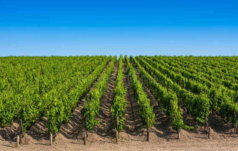 Paisaje del viñedo cerca de Burdeos, Francia foto de archivo