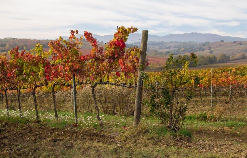 Paisaje del viñedo de Chianti en Toscana fotos de archivo