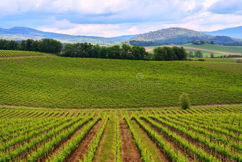 Paisaje del viñedo de Chianti en Toscana foto de archivo libre de regalías