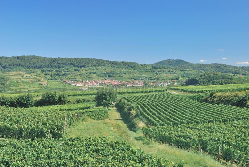 Paisaje del viñedo, Kaiserstuhl, bosque negro, Alemania foto de archivo