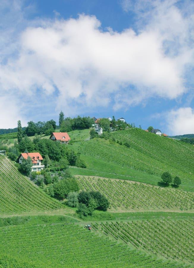 Paisaje del viñedo, Leutschasch, Estiria, Austria fotografía de archivo