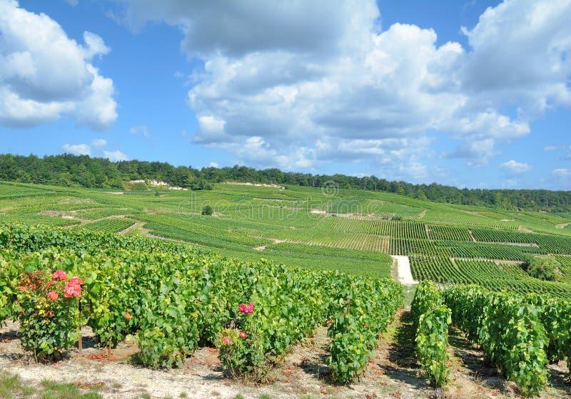 Paisaje del viñedo, región de Champán, Epernay, Francia fotografía de archivo libre de regalías