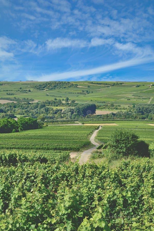 Paisaje del viñedo, región del vino de Rhinehessen, Alemania imagen de archivo